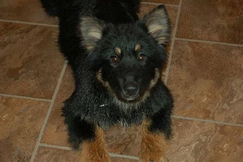 aspca dogs for adoption spca dogs for adoption edmonton alberta breeds picture