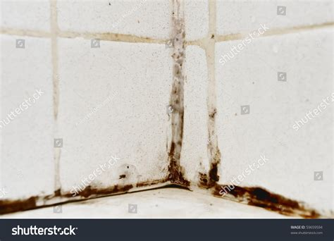 mold growing in bathroom black mold growing on shower tiles stock photo 59659594