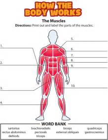 activity the muscles