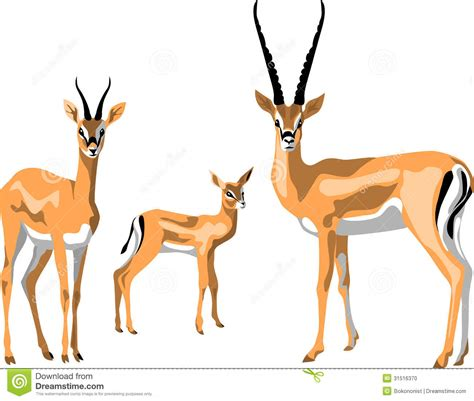 gazelle stock photo image 31516370