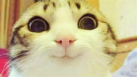 imagenes de animales feos y chistosos animales graciosos si te ries pierdes muy dificil
