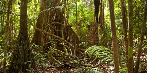 amazon de stronger forest protection key to amazon replanting push