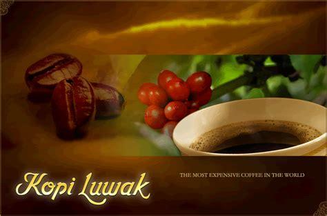 Kopi Luwak 10gr authentic kopi luwak civet coffee single serving 10gr ebay