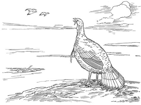 turkey hunting coloring page turkey hunting coloring pages