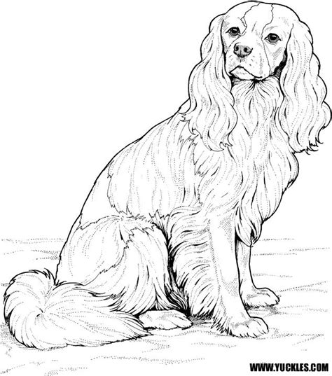 coloring pages of cavalier king charles spaniels ckcs coloring page by yuckles