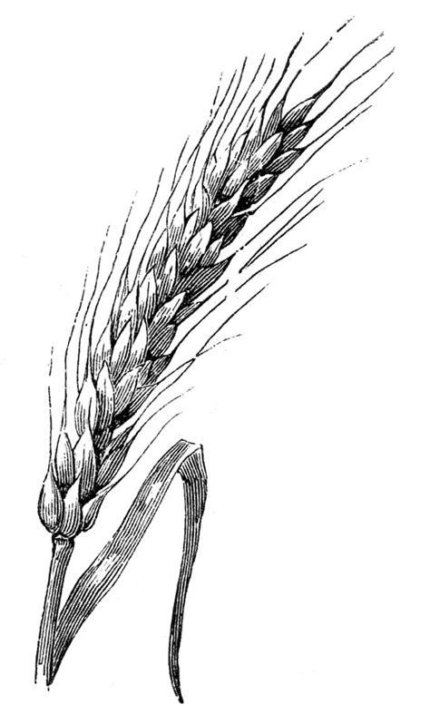 thursday  request day pig birds  nest wheat