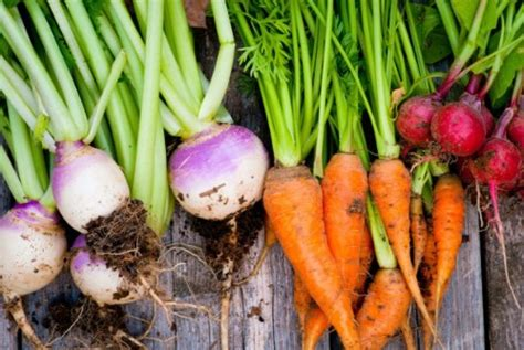 how to grow root vegetables 25 foods you can re grow yourself from kitchen scraps