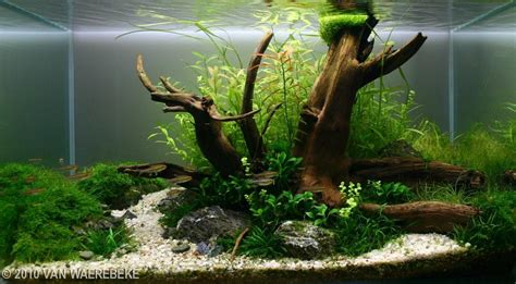Aquascaping With Driftwood by 2010 Aga Aquascaping Contest 152