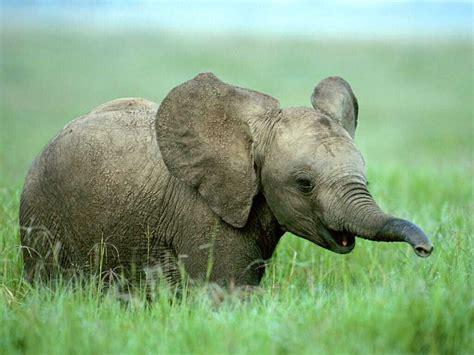 Top 5 Musical Elephantisms   elephant journal