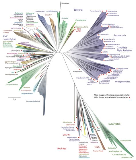 Tree Of tree of biology