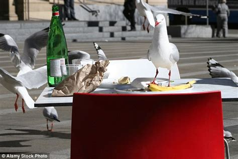 seagulls learn that leftovers will be dropped outside
