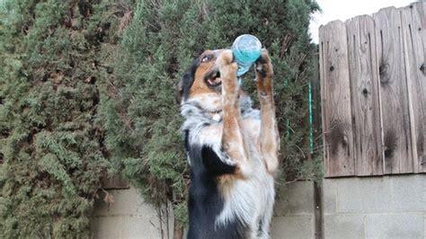 can dogs drink gatorade animated gif