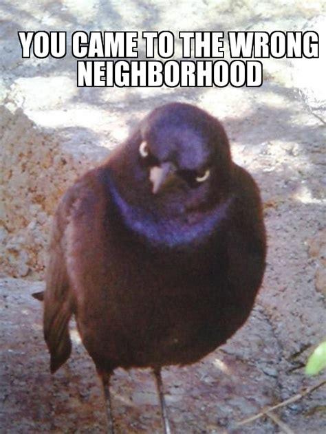 Bird Meme - angry bird meme generator image memes at relatably com