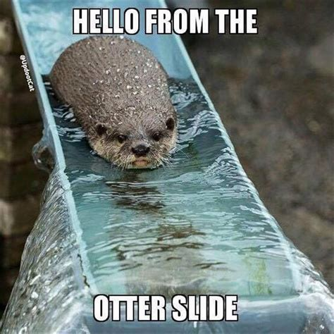 Funny Otter Memes - funny animal pictures of the day 28 pics