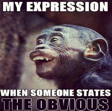 Duh Meme Face - funny facial expressions dump a day