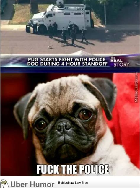 pug pics with quotes pug lyfe pictures quotes pics photos images of really