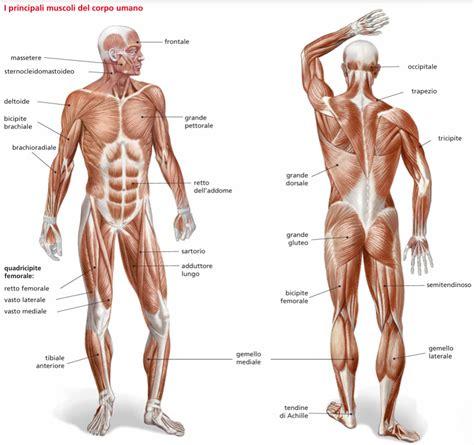 muscoli sedere i muscoli 2 thinglink