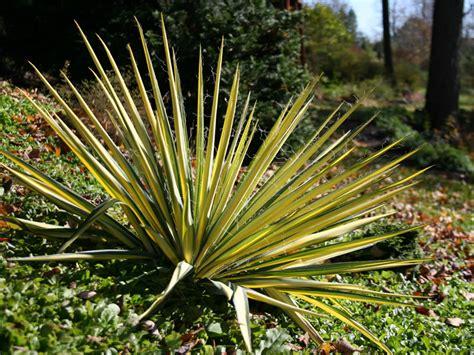 color guard yucca colorguard yucca
