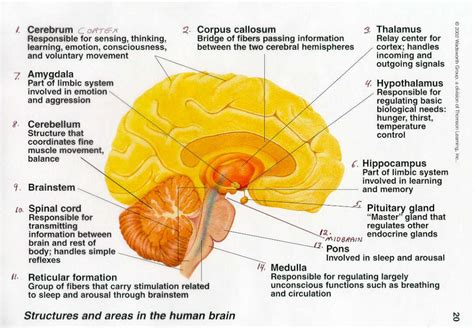 diagram with functions the brain anatomy and function human anatomy diagram