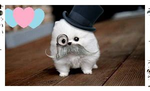 puppy with mustache for mustache puppy by aclockworkkitten on deviantart