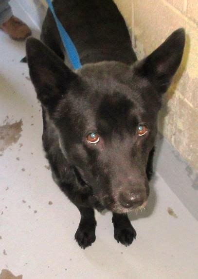 portage county warden 1000 images about black dogs cats them on shelters animal