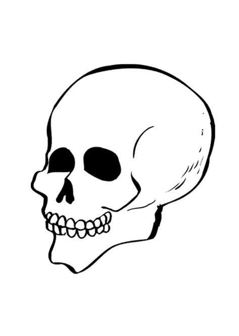 coloring page skull skull coloring pages coloringpagesabc