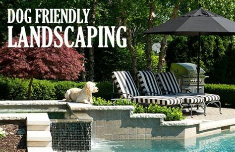dog friendly backyard landscaping must have dog friendly landscaping landscape and garden