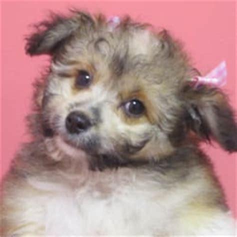 puppies rockford il babies rockford haustierzucht 7200 harrison ave rockford il vereinigte