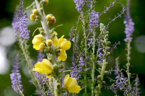 imagenes de flores medicinales salud y calidad de vida vivir mejorfitoterapia plantas