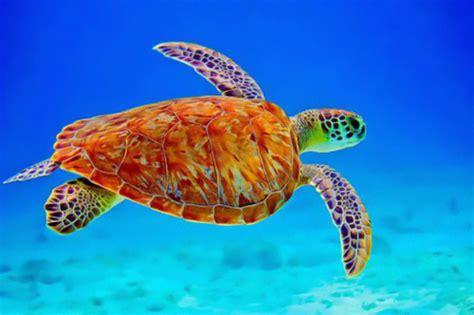 colorful turtles colorful turtles www pixshark images galleries