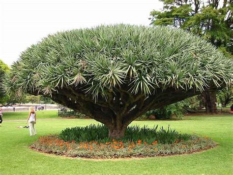 Botanical Gardens In Sydney Royal Botanic Gardens Sydney Virtualvisitorsydney
