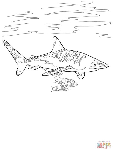 coloring pages sharks and rays oceanic whitetip shark coloring page free printable