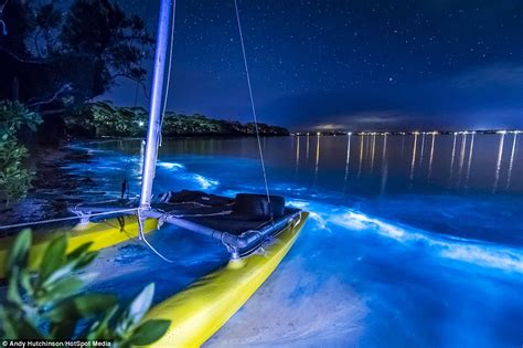 images of neon blue fluorescent algae which lights up east