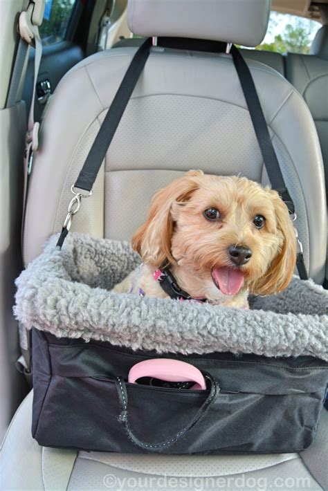 yorkie car seat car safety begins with a booster seat yourdesignerdog