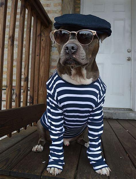 puppies in clothes dogs in clothes oo la la goodtoknow