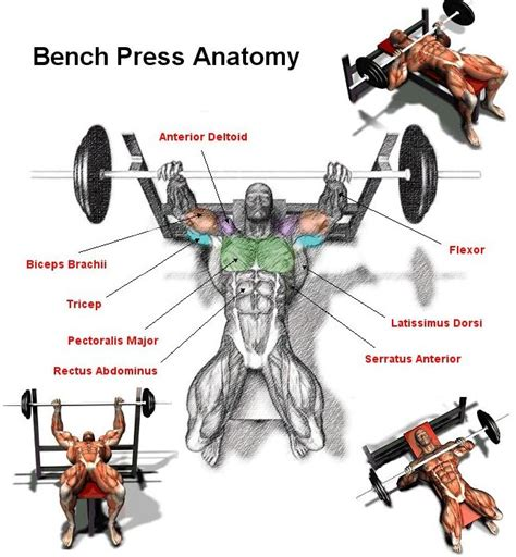 bench press for pecs gain chest mass and boost your bench press gymguider com