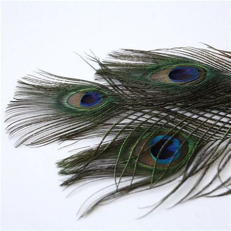 Dress Import Qq Brokat By Newstyle buy bulu merak asli panjang 25 30 cm untuk souvenir