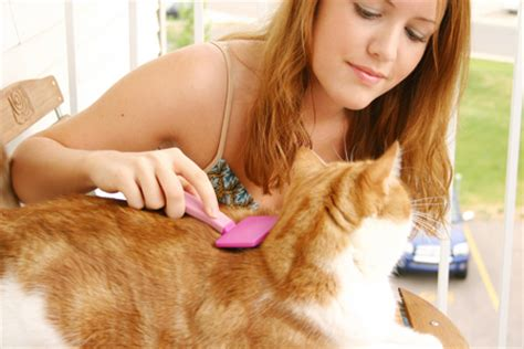 Do Cats Shed Their Nails by Cat Grooming Tools Cat Brush Cat Nail Trimmer Cat