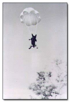 Sergeant Stubby Cracked Skydiving Cats The Chicago Garage