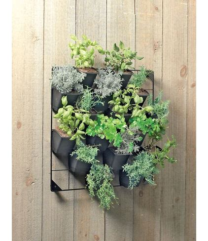 herbs on wall 17 best ideas about wall herb gardens on pinterest herbs