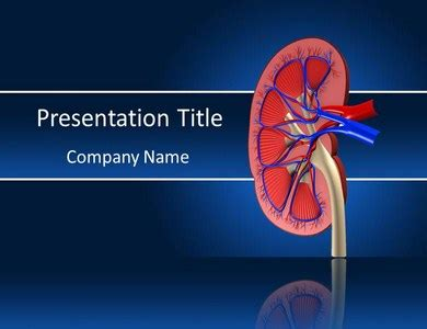 powerpoint templates urinary system understanding kidney function easily by powerpoint