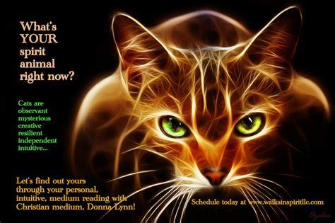 whats  spirit animal walks  spirit llc