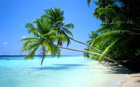 Coconut Tree xs wallpapers hd coconut tree wallpapers