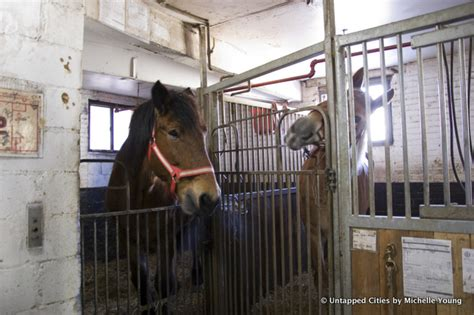 Small City Backyard Ideas Behind The Scenes In The Clinton Park Horse Stables For