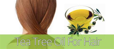 is pure tea tree oli good for ingrowing hairs tea tree oil for hair growth loss dandruff itchy scalp