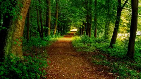 wallpaper android path forest path wallpaper wallpaper studio 10 tens of