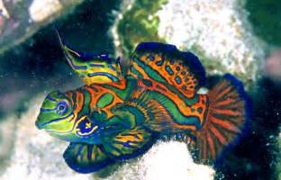 colorful saltwater fish fish info photos the wildlife