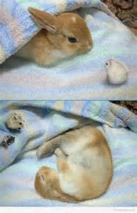 where do rabbits sleep bunny are your rabbits having trouble sleeping for just one