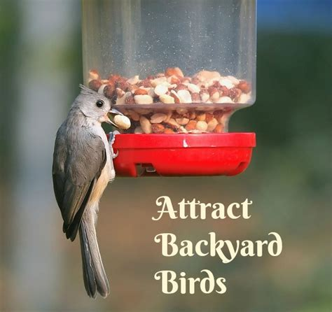 attracting backyard birds attracting backyard birds mother2motherblog