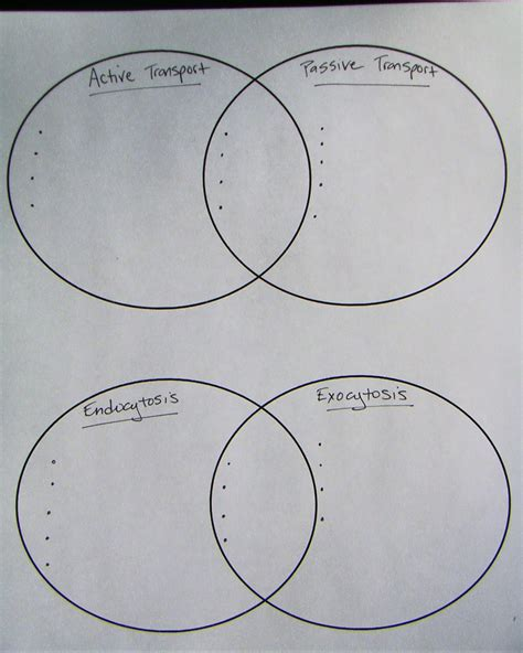 diffusion and osmosis venn diagram venn diagram comparing osmosis and diffusion image
